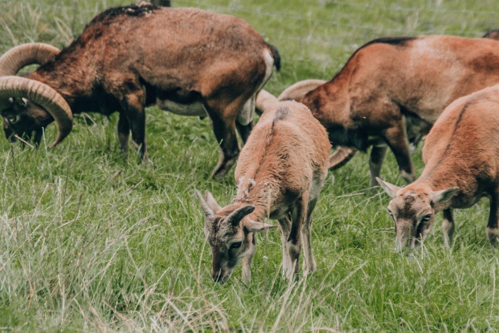 alpine wildlife park bregenz
